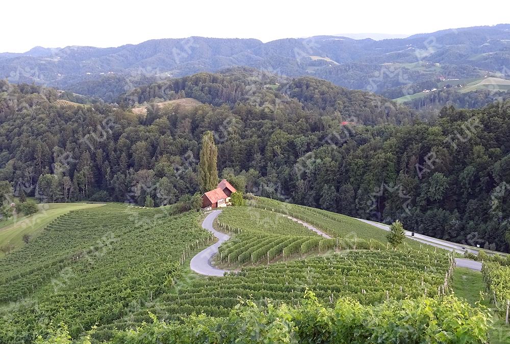Proslavimo dan žena ob srcu med vinogradi