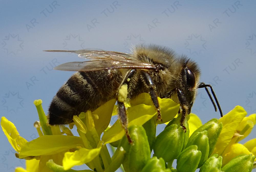 Čebelji polet v neznano